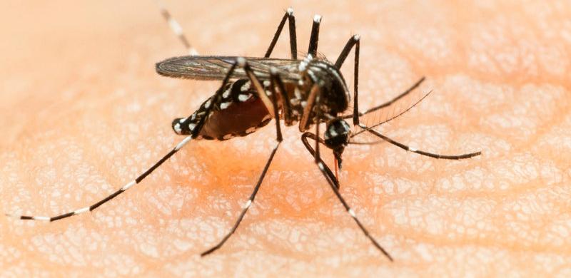 Zika láz: van-e okunk az aggodalomra?